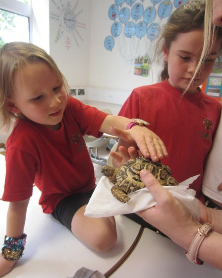 Birdwell School pupils enjoyed a visit from Noahs Ark Zoo Farm on Monday.Picture: Birdwell School