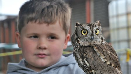 Alfie Plant 4 with Squiggle the Western Screech owlAvon Owls, in Banwell an host open day. SF26,05,