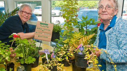 The plant stall at Weston Hospicecare summer fair. Picture: MARK ATHERTON