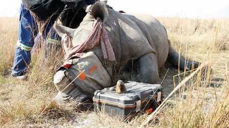 Benjamin Peters is on a mission to help rhinos