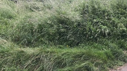 Outside the tennis court, the grass is overgrown
