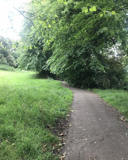 The footpath in Ashcombe park is covered by branches which need cutting