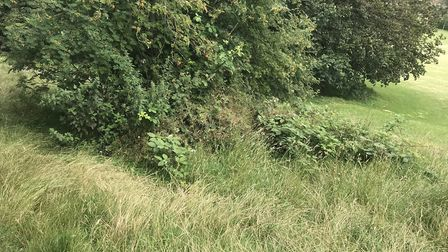 The grass at Ashcombe Park is overgrown