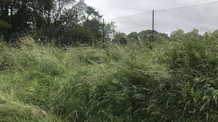 The tennis court in Ashcombe park is covered in overgrown bushes and rust