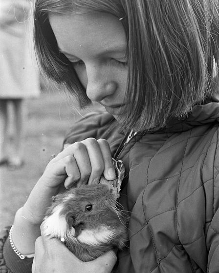 Hutton Pet Show organised by Hutton RSPCA Auxiliary. Jane Carter feeding her pet guinea pig on cabba