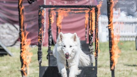 A dog is showcasing its talents at The Activity Arena.