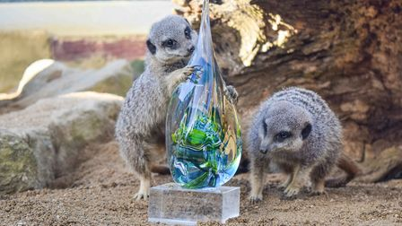 Two meerkats pose with the silver sustainability award at Noah's Ark Zoo Farm.