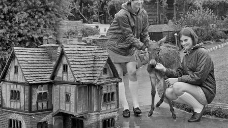 Leslie and Jane Mottershead with Moses, a one-month-old Egyptian miniature donkey at Weston's model