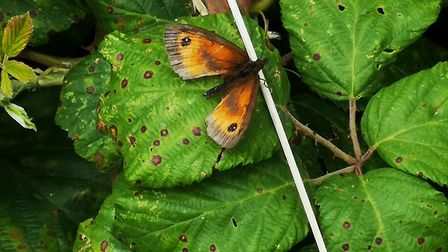 A butterfly rests on bright-green leaves in Uphill.Picture: Jacqueline Caven