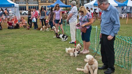 Classes being judged at Weston RSPCA dog show. Picture: MARK ATHERTON