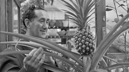 Mr. Ken Tyler, of Mansfield Road, Weston, with the pineapple he grew from a cutting planted four yea