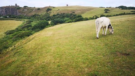 A cow grazes on top a hilly plain.Picture: JACQUELINE CAVEN