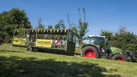 Tractor tours of the orchards.