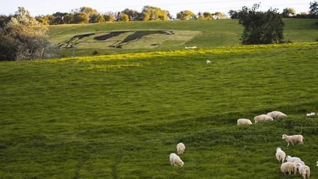 A cow created by Yeo Valley made entirely of manure placed on a hill in Blagdon.