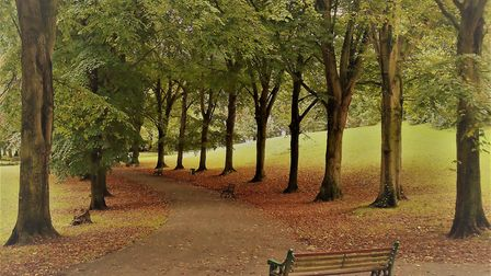 Fallen leaves surround Ashcombe Park.Picture: Nick Page Hayman
