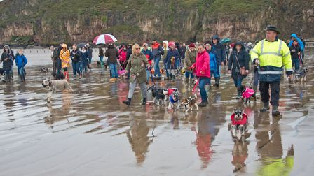 Schnauzer dog owners on Brean Beach as part of a National charity event. Picture: MARK ATHERTON