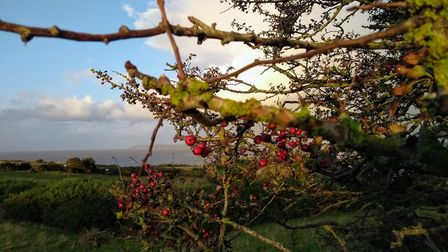 Autumn has set-in on the Mendips.Picture: Sarah Doe