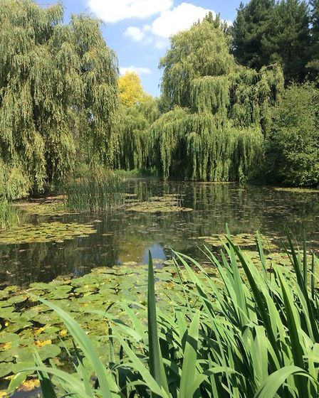 Beautiful water gardens in the summer.Picture: Many Rigley