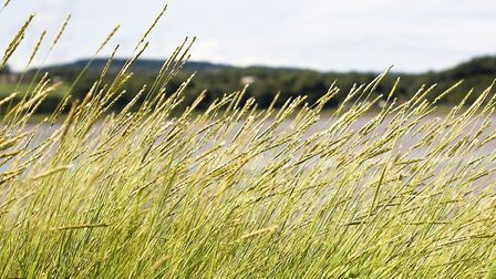 The council is hoping to convert 16 per cent of its sites into tall grass areas and a further 10 per