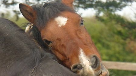 Horse companions at a North Somerset riding centre. Picture: Billy Jo Howe