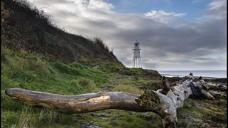 A large tree washes up on shoreline around Portishead.Picture: Alan Harrison
