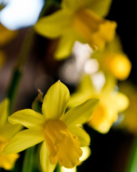 Clevedon Gardener's Club 62nd Spring Flower Show at Princes Hall, Community Centre. Picture: MARK