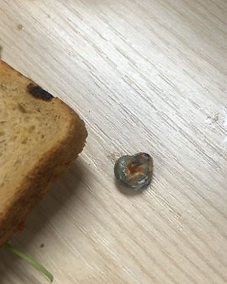 The snail which was found in the sandwich