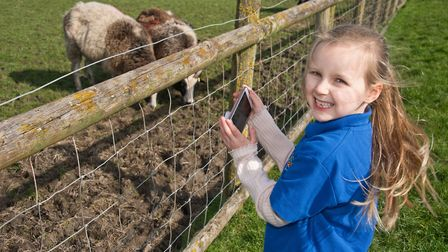Jessica filming the sheep at Animal Farm Adventure Park. Picture: MARK ATHERTON