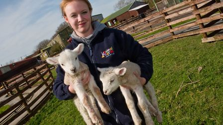Aimee Horner with the new lambs at Animal Farm Adventure Park. Picture: MARK ATHERTON