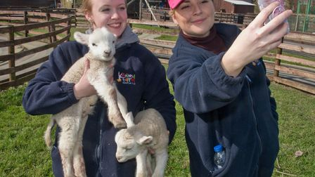 Krystal Finch filming herself and Aimee Horner with the new lambs at Animal Farm Adventure Park.