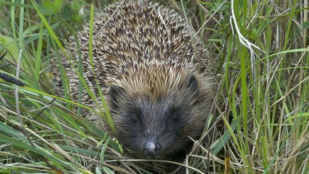 EDDC's countryside team are showing people how to help hedgehogs
