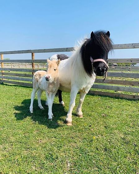 Animal Farm Adventure Park's new foal has been named Captain Tom following a public vote. Pictures: