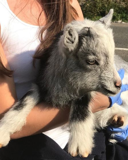A kid goat was rescued from Cheddar Gorge this month. Picture: RSPCA North Somerset