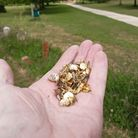 John du Heaume found the pins scattered on the cyclepath near Watchhouse Hill. Picture: John du Heau