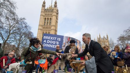 """Dogs sitting on a dinner table are served with dog food during an anti-brexit event billed as """"the b"""