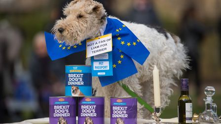 """Fox terrier Celeste sits on a dinner table during an anti-brexit event billed as """"the biggest dog's"""