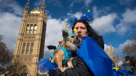 """Chihuahua Cookie with owner Alex during an anti-brexit event billed as """"the biggest dog's dinner in"""