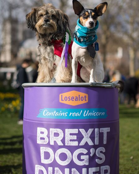 """Dogs sit on a giant dog food can during an anti-brexit event billed as """"the biggest dog's dinner in"""