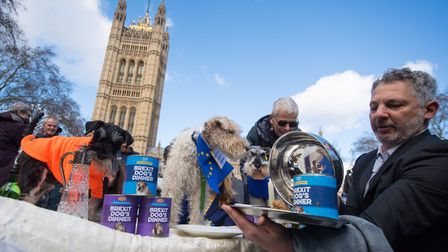 """Dogs sit on a dinner table during an anti-brexit event billed as """"the biggest dog's dinner in histor"""