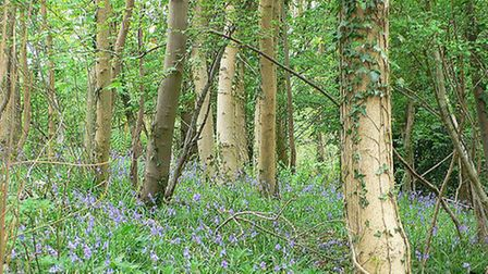 Bluebells in Snake's Well Wood near Abbots Leigh © Heather Cowper, Flickr
