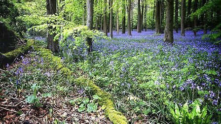 Bluebell woods at Goblin Combe near Cleeve © Yelsel_R, Flickr