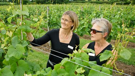 Tasting and vineyard tour to launch new wine. MD Sandy Luck and vinyard manager Elizabeth Laver.