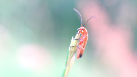 An ant-like insect plans its next move.Picture: Anthony Bishop