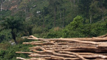 Evidence of deforestation outside Freetown in Sierra Leone. Picture: Lewis Whyld/PA Archive/PA Imag
