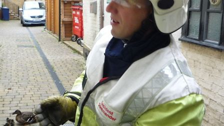 watch commander Rob Cowling with the rescued ducklings