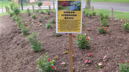 Stolen roses in Greenwood Park, Chiswell Green