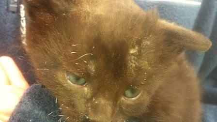 Kitten rescued from stack fire