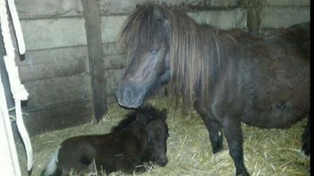 The foals have been reunited with their mothers
