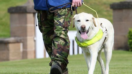 Warning about attacks on guide dogs