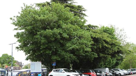 The trees in St Albans City station car park